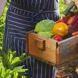 Organic Garden Onsite